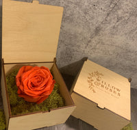 ORANGE ROSE, LIMITED EDITION