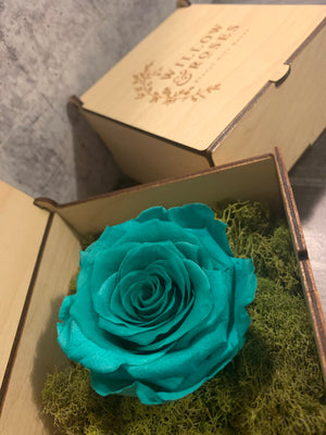 TIFFANY BLUE ROSE, LIMITED EDITION