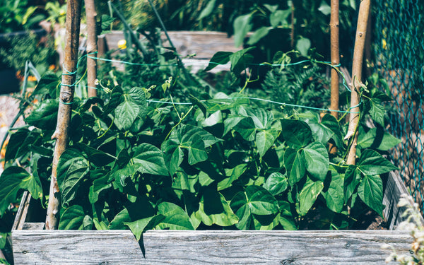 Beginner's Guide to Composting At Home - Ready To Use