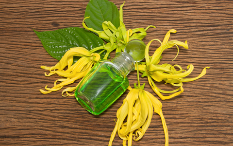 Ylang Ylang Essential Oil Eco Friendly Beauty Products