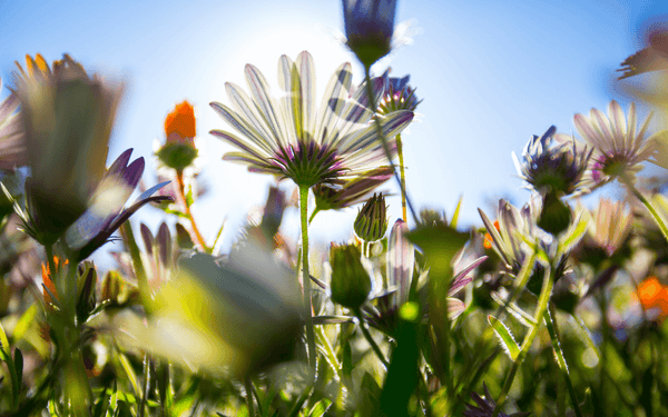 The Ideal Sunday - The Wildflower Seeds
