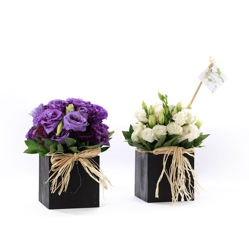 Set of 2 Box Arrangements