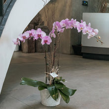 Load image into Gallery viewer, Pink Phalaenopsis Vase