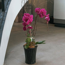 Load image into Gallery viewer, Fuchsia Phalaenopsis Vase