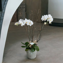 Load image into Gallery viewer, White Phalaenopsis Vase
