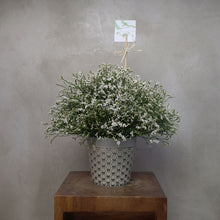 Load image into Gallery viewer, Misty White Vase
