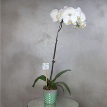 Load image into Gallery viewer, Bloom Vase
