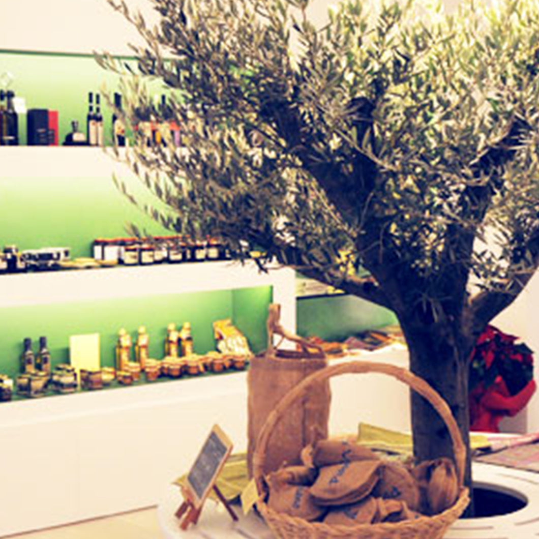 An olive tree surrounded by a circular bench sits inside Podere Vecciano.