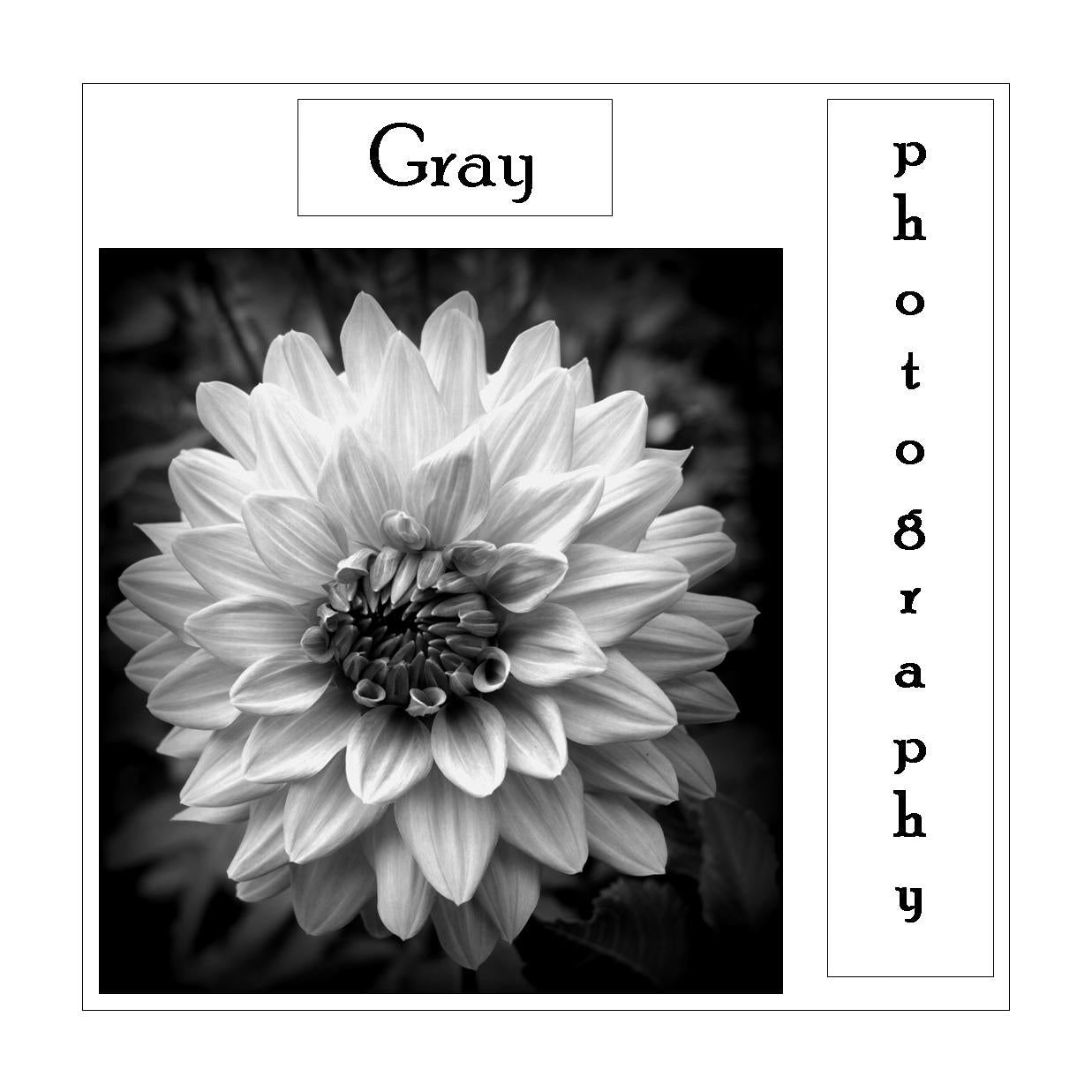 Gray Photography Book