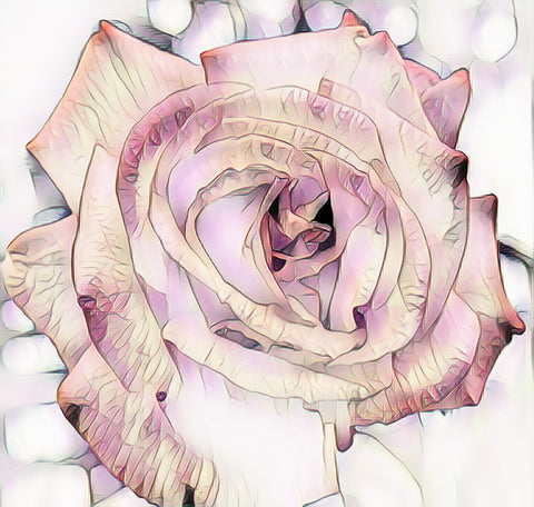 """Rose Hue"" Digital Art"