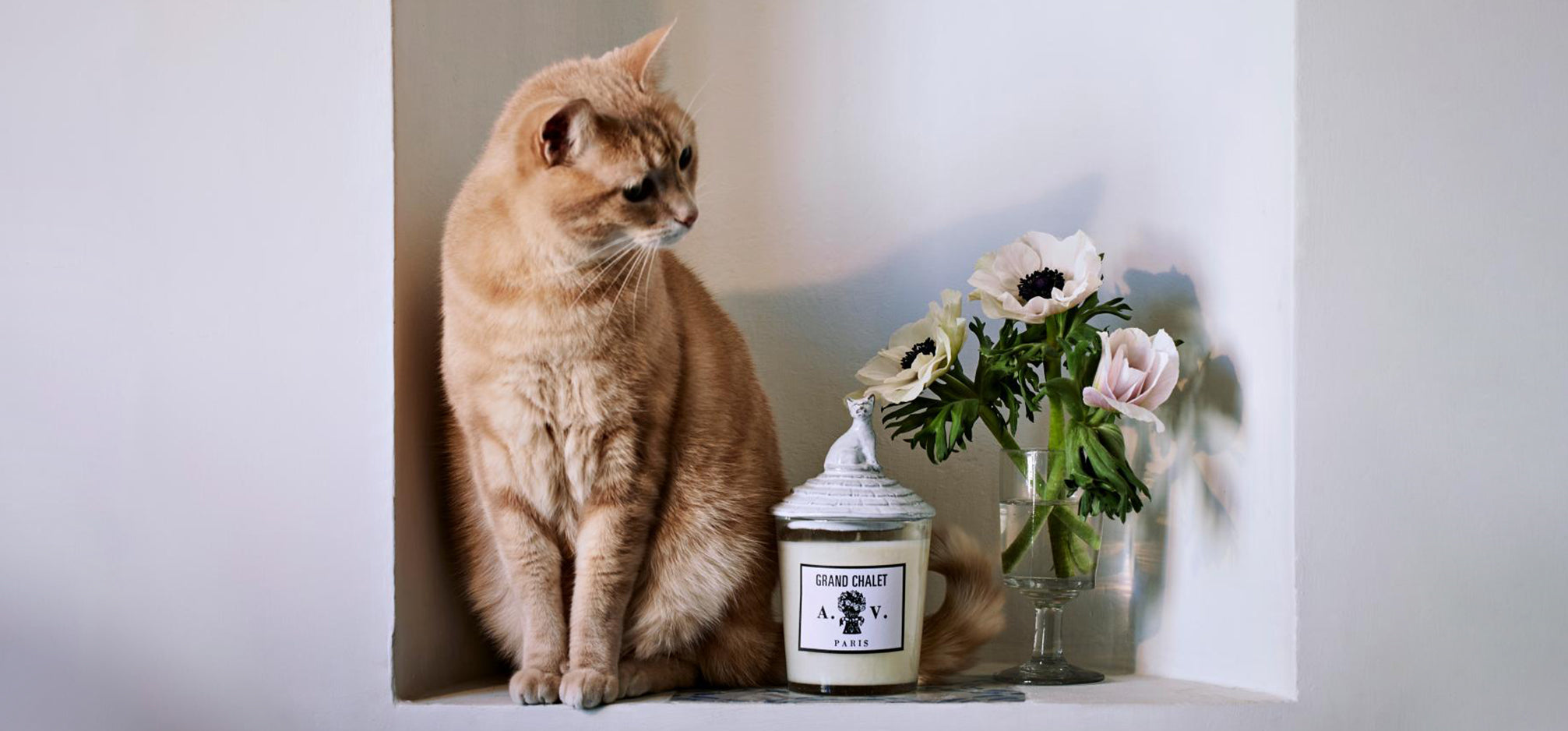 A shelf with a candle and a cat on it.