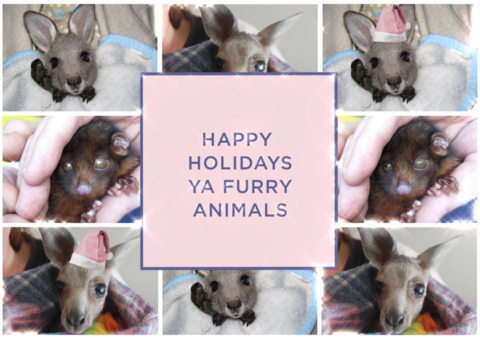 HAPPY HOLIDAYS YA FURRY ANIMALS!