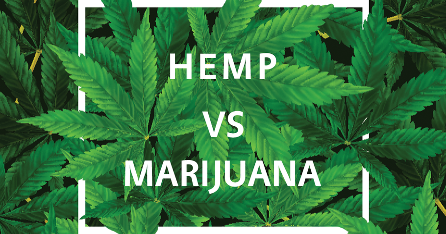 A Brief Look at Hemp vs Marijuana