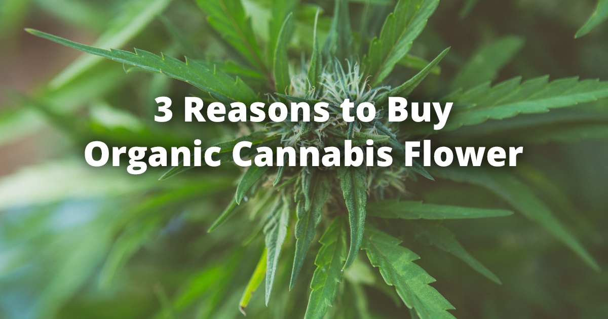 3 Reasons to Buy Organic Cannabis Flower from Ruby's Happy Farm