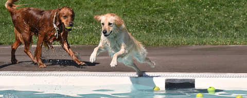 Virtual dog swim for charity