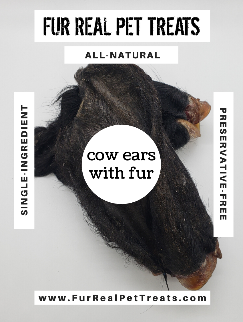 Cow Ears with Fur
