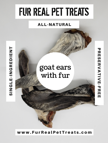 Goat Ears with Fur