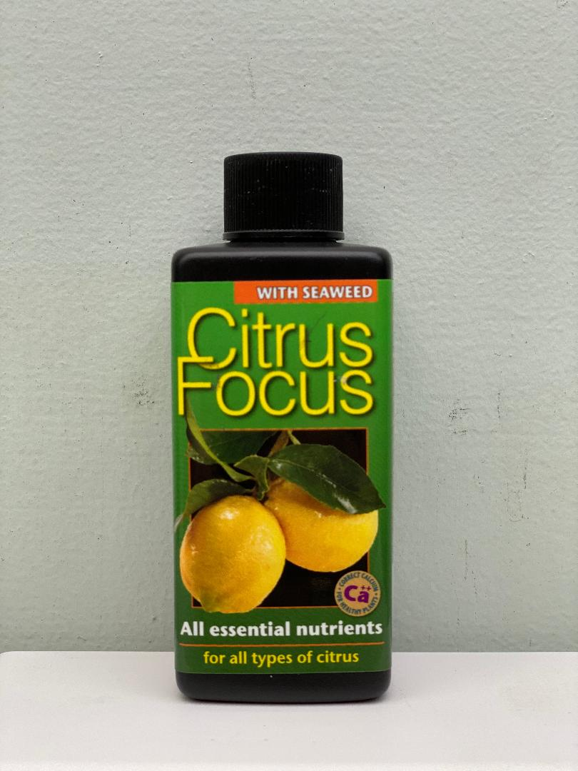 Citrus Focus 100ml