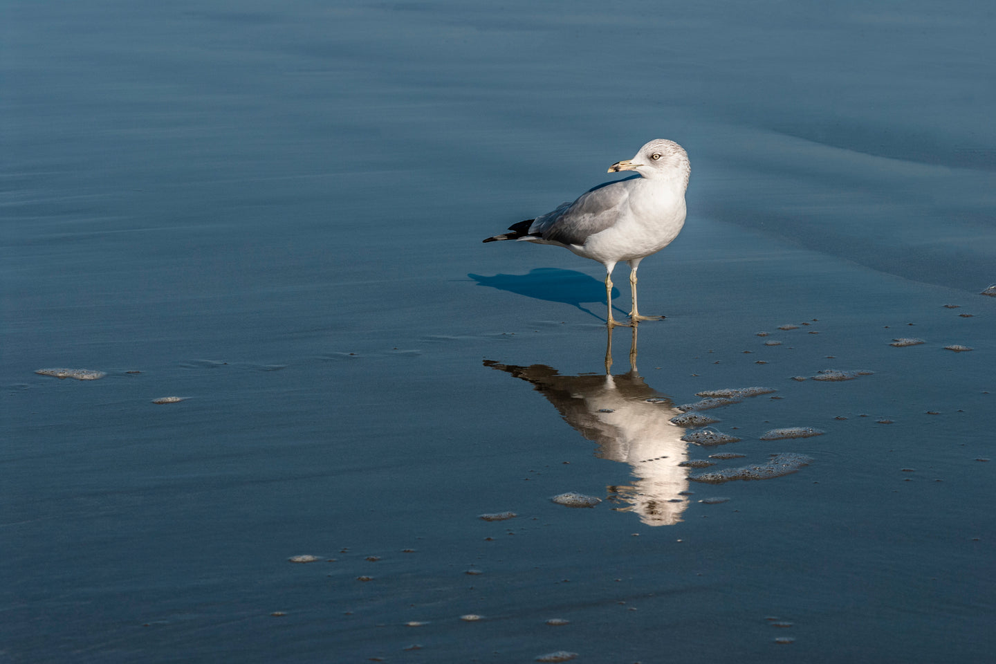 Reflection of a Bird