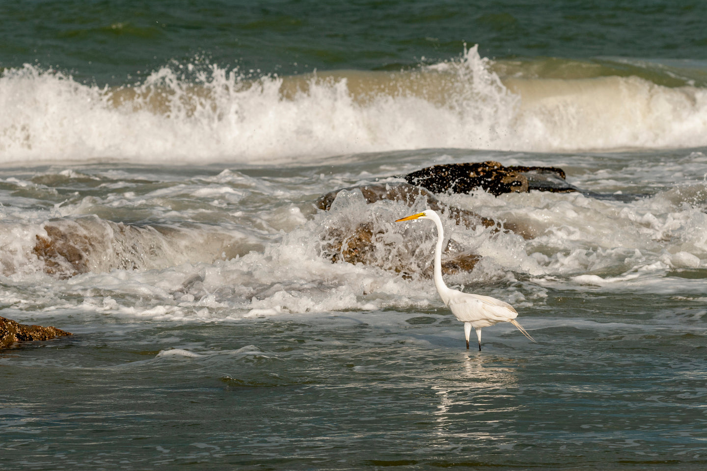 Egret on the Beach