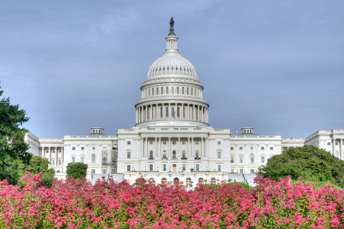 Capitol in Bloom (Landscape)