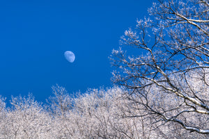 Moon and Ice