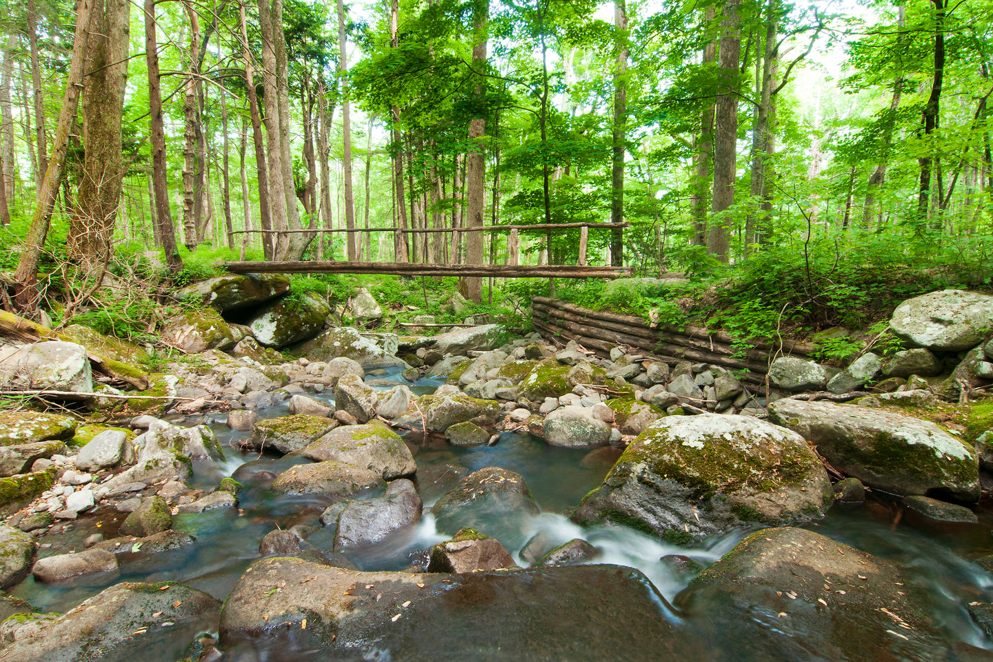 Footbridge in the Forest