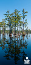 Load image into Gallery viewer, Goodale State Park - South Carolina