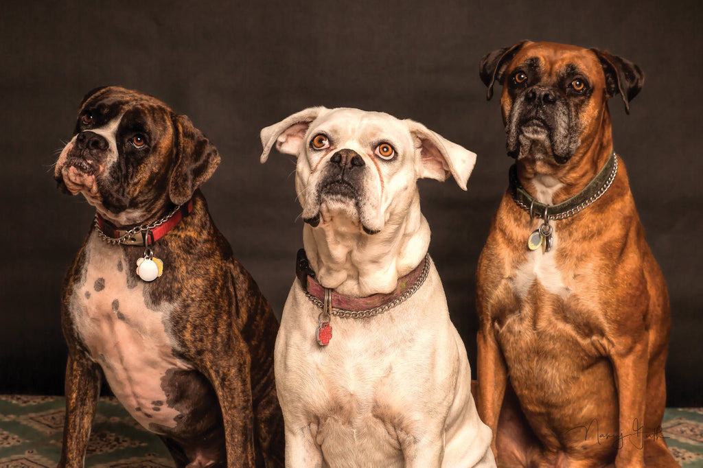 10 things to keep in mind while getting a Dog Portrait!
