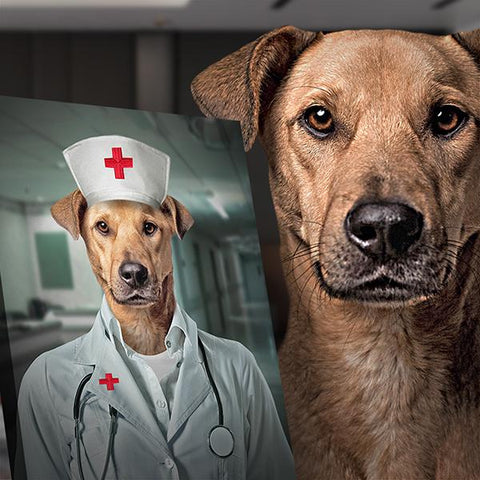 Nurse-pet  // Custom Pet Portrait