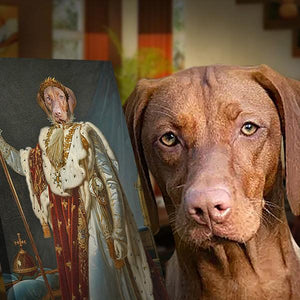 King Pet-Louis XIV // Custom Pet Portrait