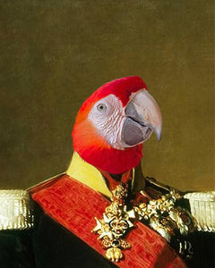 belgian royal bird portrait