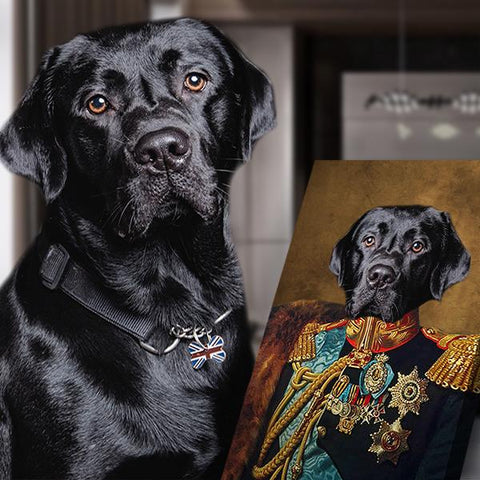 count dog portrait