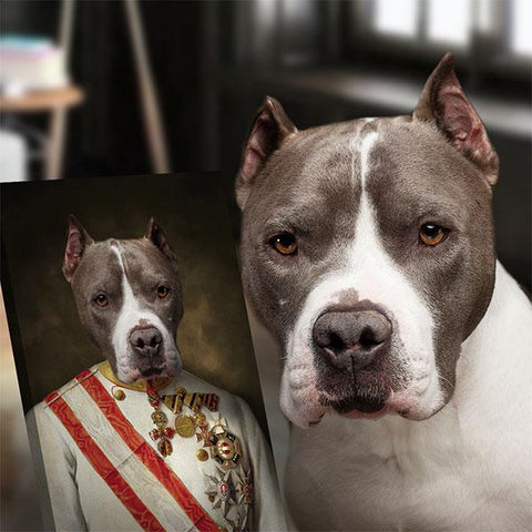 Image of Kaizer dog portrait