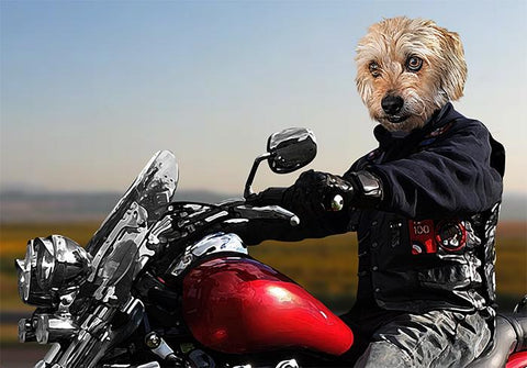 Image of Biker custom pet portraits