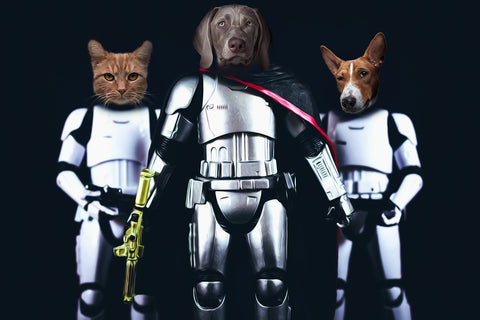cat starwars portrait