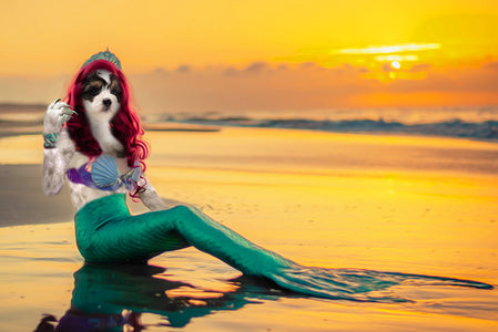 Mermaid-Pet // Custom Pet Portrait