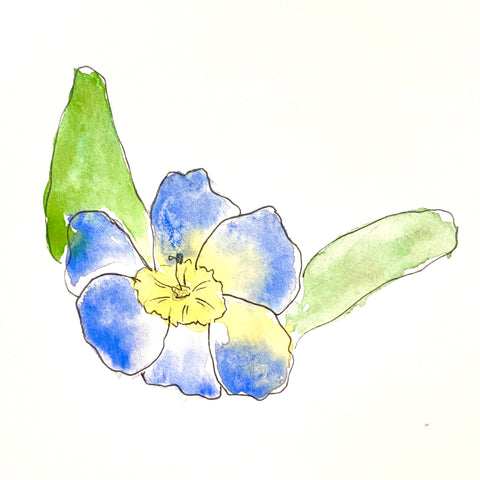 Riles' watercolor painting of  primrose