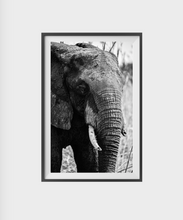 Load image into Gallery viewer, Tusks