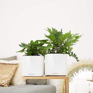 Lechuza CUBE Glossy 14 <br>All-in-One <br>Smart-Watering Planter