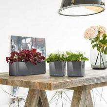 Load image into Gallery viewer, Lechuza CUBE Glossy 14 <br>All-in-One <br>Smart-Watering Planter