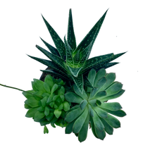 Load image into Gallery viewer, Succulent Garden