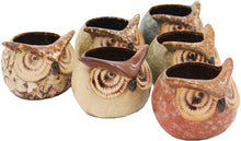 Load image into Gallery viewer, Set of 6 Owl Pots, Cute Little Ceramic Succulent Cactus Plant Pot Flower (SIX POTS # 3) - DharmaObjects