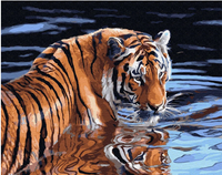 Tiger Diy Paint By Numbers Kits Uk VM90285