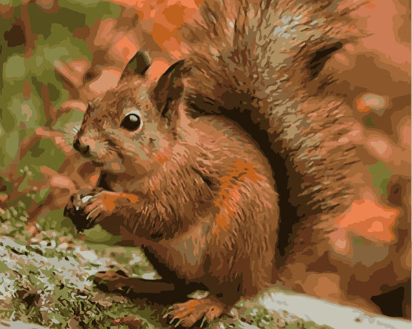 Squirrel Diy Paint By Numbers Kits Uk WM1115