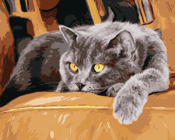 Cat Diy Paint By Numbers Kits Uk WM190