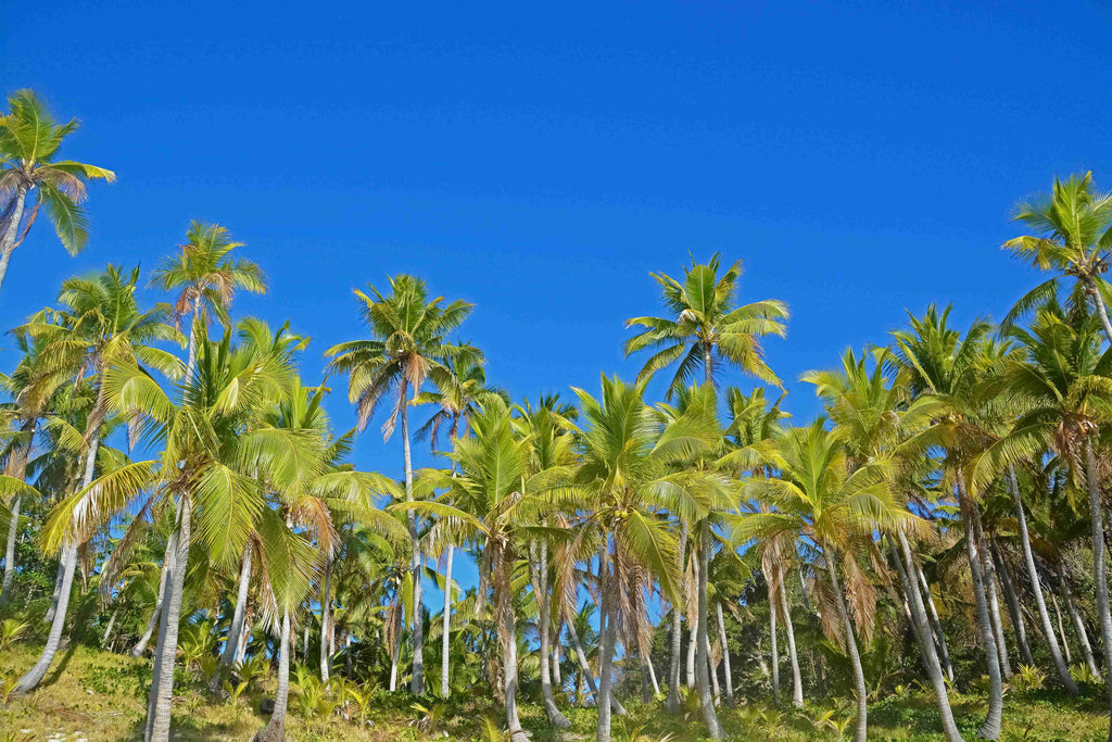 coconut trees under blue sky during daytime photo