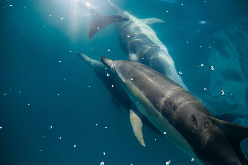 underwater photography of three dolphins photo