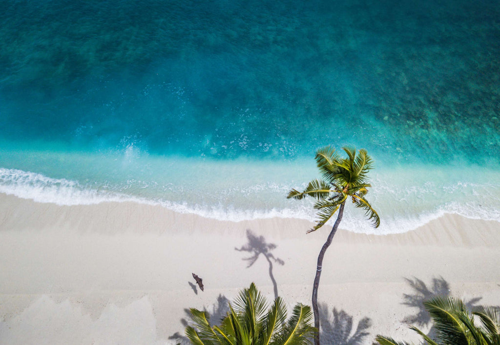 aerial nature photography of green palms on seashore during daytime photo