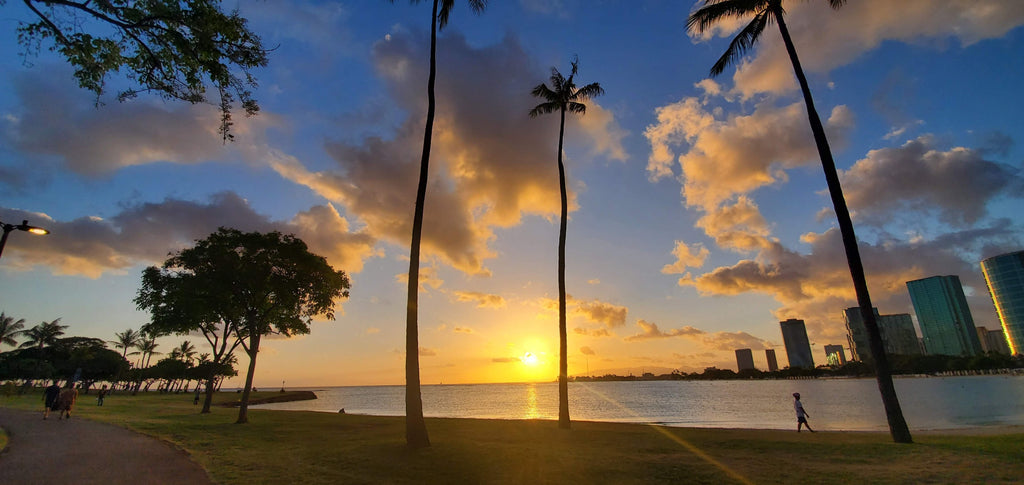 palm tree near body of water during sunset photo